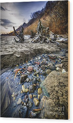 Beach Brook At Scarborough Bluffs Wood Print by Elena Elisseeva