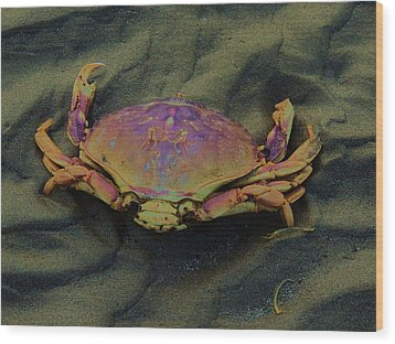 Beach Crab Wood Print by Helen Carson
