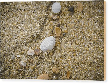 Wood Print featuring the photograph Beach Debris by Bradley Clay