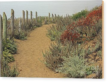 Wood Print featuring the photograph Beach Dune  by Kate Brown