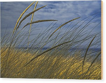 Beach Grass On A Sand Dune At Glen Arbor Michigan Wood Print