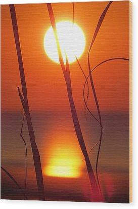 Beach Grass Sunrise Wood Print