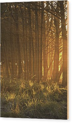 Wood Print featuring the photograph Beach Light Through The Trees by Judi Baker