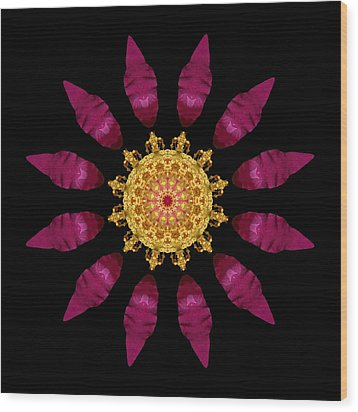Beach Rose Iv Flower Mandala Wood Print