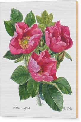 Beach Roses -  Rosa Rugosa Wood Print by Janet  Zeh