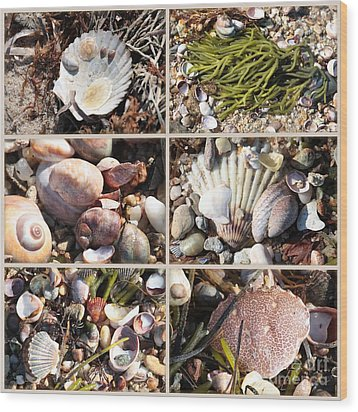 Beach Treasures Wood Print by Carol Groenen