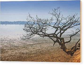 Beach Tree Wood Print by Svetlana Sewell