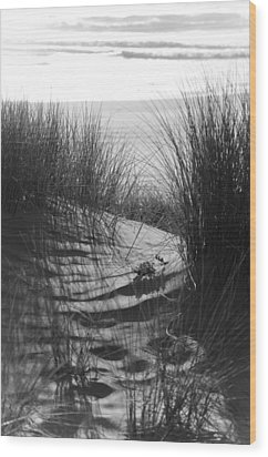 Wood Print featuring the photograph Beachgrass by Adria Trail