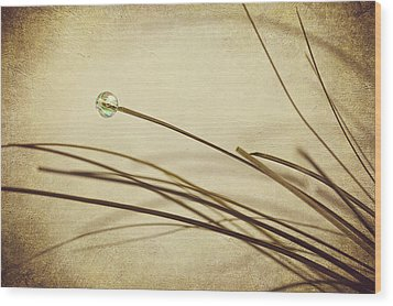 Bead Wood Print by Svetlana Sewell
