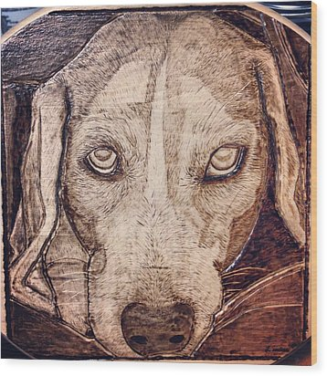 Beagle Bailey Wood Print by Lindsee Pitsch