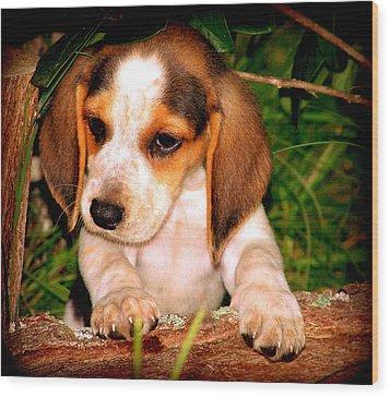 Beagle Puppy 1 Wood Print by Lynn Griffin