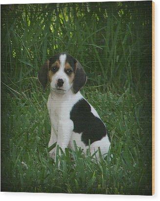 Beagle Puppy 4 Wood Print by Lynn Griffin
