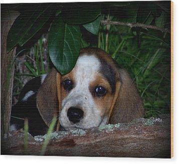 Beagle Puppy Wood Print by Lynn Griffin