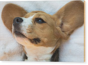 Beagles Dreams Wood Print
