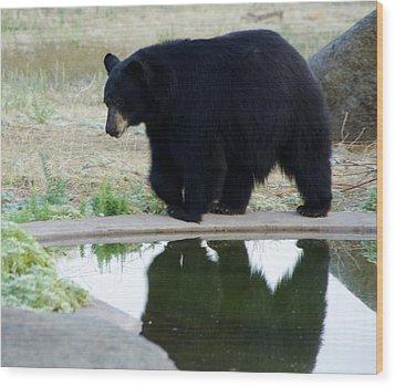 Bear 2 Wood Print