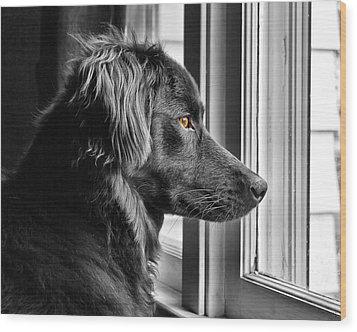 Bear At Window Wood Print by Tim Buisman