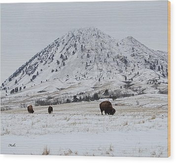 Bear Butte Buffalo Wood Print