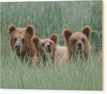 Bear Cubs Peeking Out Wood Print