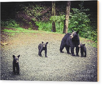 Wood Print featuring the photograph Bear Family Affair by Jan Dappen