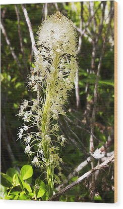 Bear Grass No 3 Wood Print