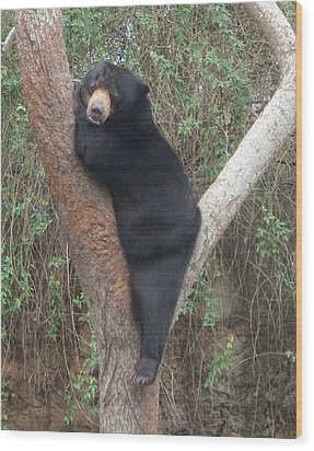 Bear In Tree   Wood Print