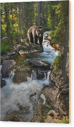 Bear Necessity Wood Print by Ken Smith