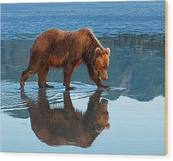 Bear Of A Reflection 8x10 Wood Print