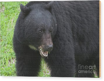 Wood Print featuring the photograph Bear by Rod Wiens
