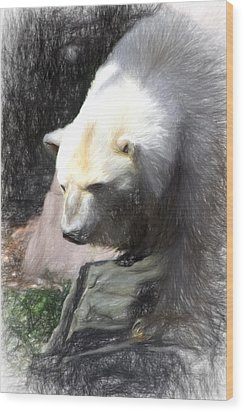 Bear Visions Wood Print by Terry Cork