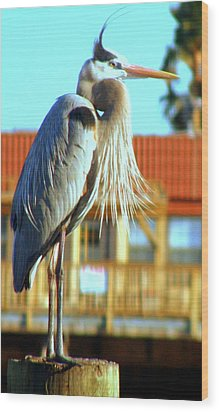 Wood Print featuring the photograph Bearded Great Blue Heron by Antonia Citrino