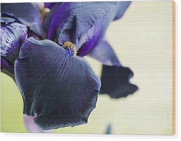 Bearded Iris Interpol Wood Print by Tim Gainey