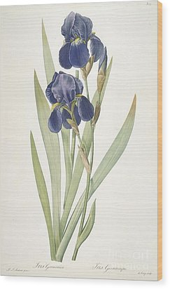 Bearded Iris Wood Print by Pierre Joseph Redoute