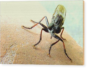 Bearded Robber Fly Wood Print
