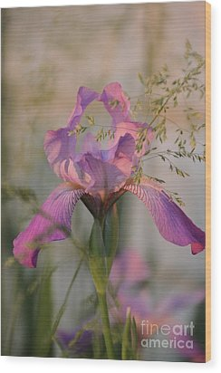 Beautiful And Mystical Iris  Wood Print