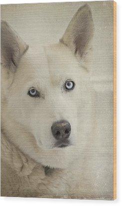 Beautiful Blue Eyes Wood Print by Cindy Rubin