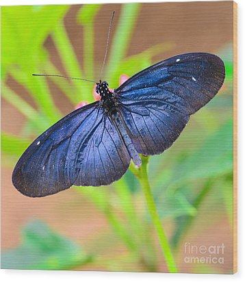 Beautiful Blue Wood Print by Tamara Becker