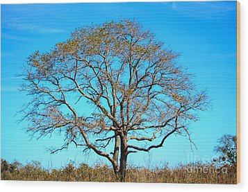 Wood Print featuring the photograph Beautiful Branching by Debra Martz