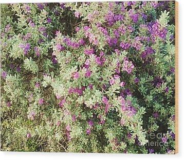 Beautiful Bush Wood Print by Esther Rowden