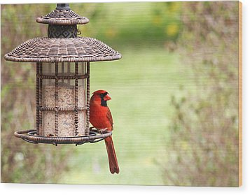 Wood Print featuring the photograph Beautiful Cardinal by Trina  Ansel