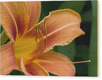Beautiful Daylily Wood Print by Gene Walls
