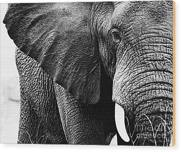 Beautiful Elephant Black And White 1 Wood Print by Boon Mee