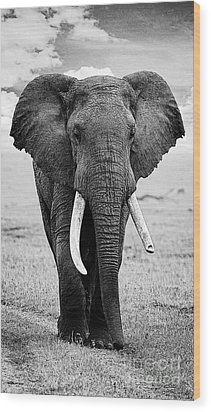 Beautiful Elephant Black And White 17 Wood Print by Boon Mee
