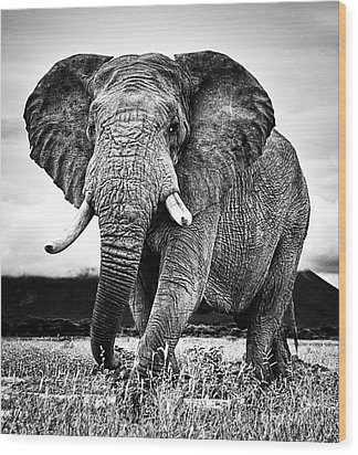 Beautiful Elephant Black And White 33 Wood Print by Boon Mee