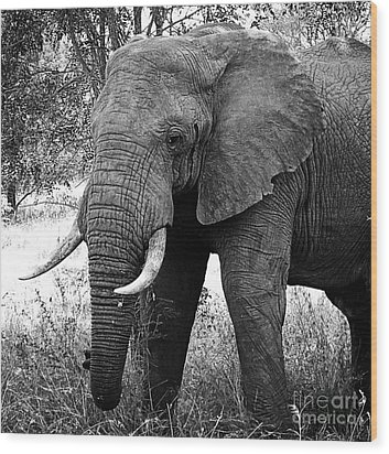 Beautiful Elephant Black And White 59 Wood Print by Boon Mee