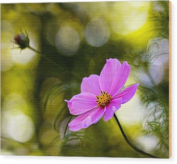Wood Print featuring the photograph Beautiful Evening Pink Cosmos Wildflower by Tracie Kaska