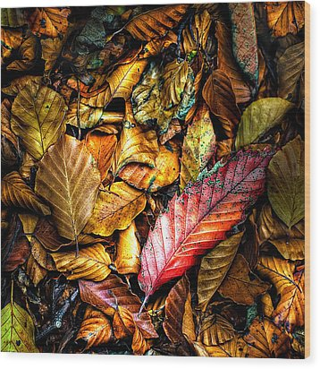 Beautiful Fall Color Wood Print by Meirion Matthias