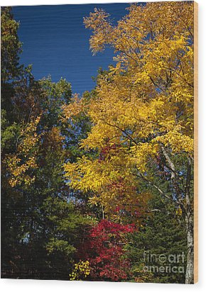 Beautiful Fall Wood Print