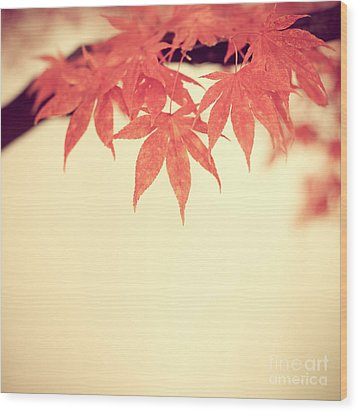 Beautiful Fall Wood Print by Hannes Cmarits