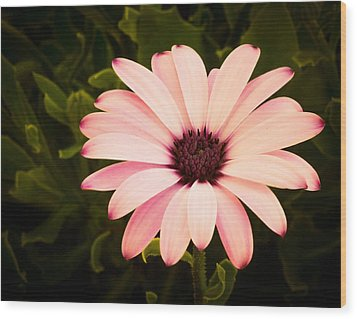 Beautiful Flower  Wood Print