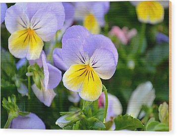 Beautiful Flowers Wood Print
